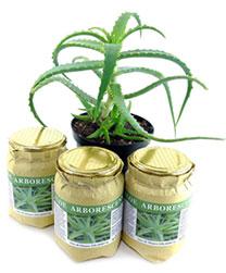 Aloe Pflanze ERBEDIMAURO
