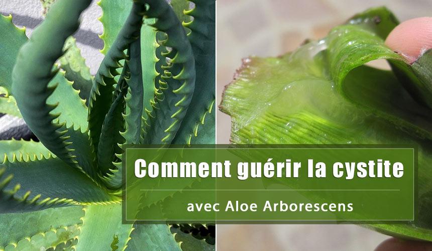 Comment guérir la cystite avec Aloe Arborescens